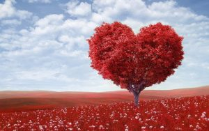 The Heart According to Chinese Medicine | Calandra Acupuncture Chicago Blog