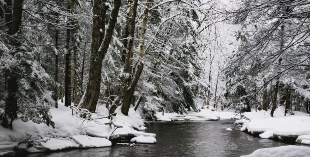 snowy river for immune boosting